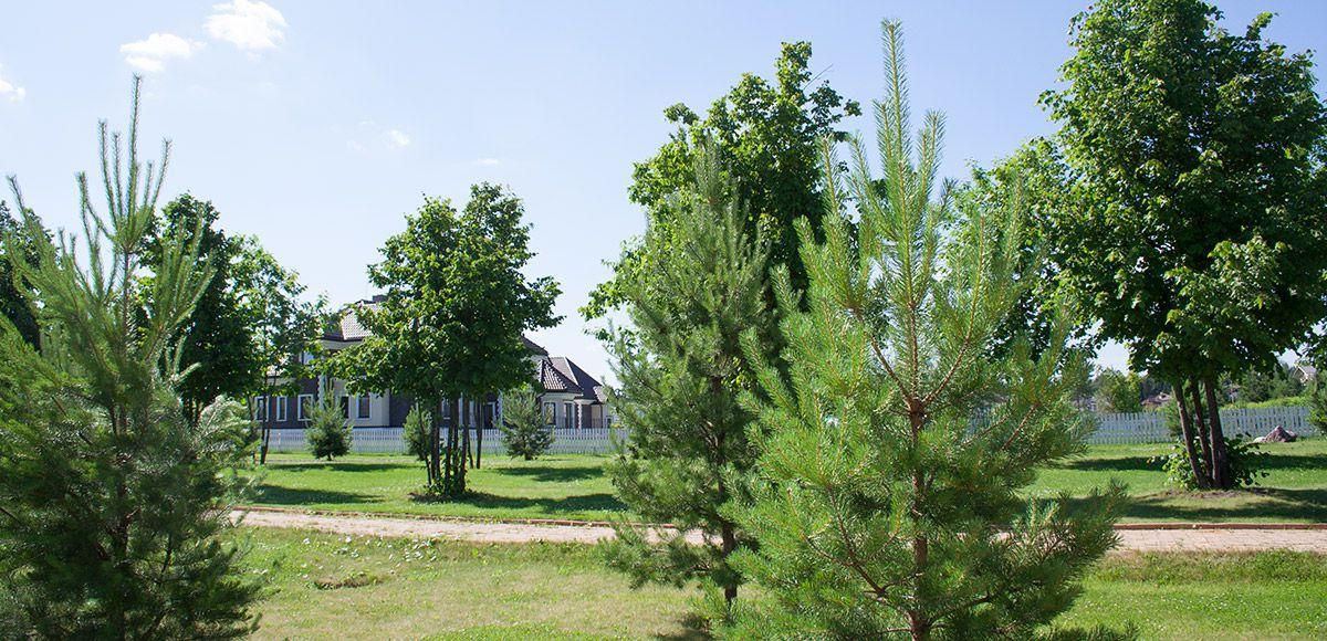 Кругом деревья, поселок Онегино