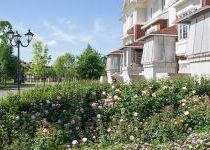 Староанглийские розы, поселок Онегино